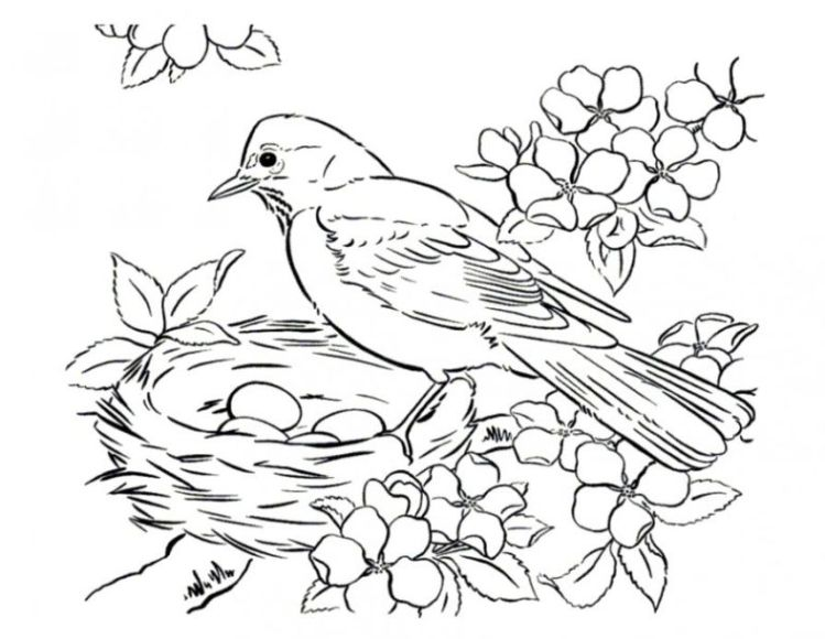 bird in nest coloring pages - photo#36